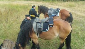Bild 10 - Auch die Pferde brauchen mal eine kurze Pause.